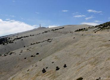Pentes du Mont Ventoux