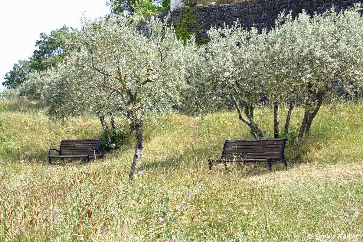 Parc nature avec oliviers, à Gréoux Les Bains, à côté du Château.