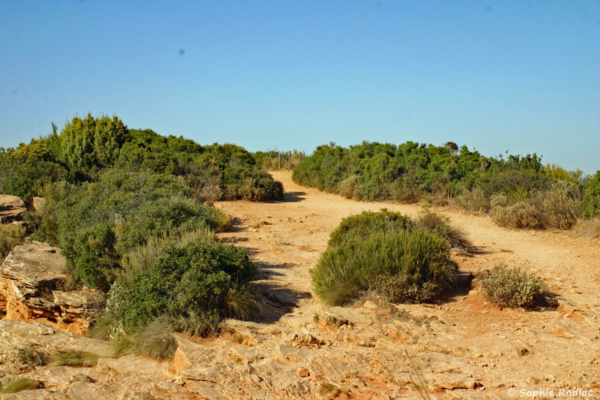 Sentier sur les falaises Soubeyranes
