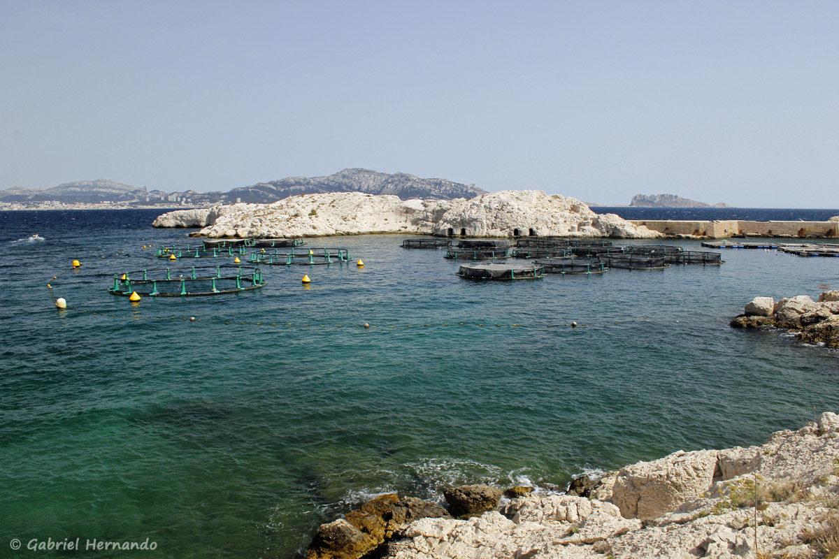 Ferme aquacole dans le porte de l'île de Pomégues