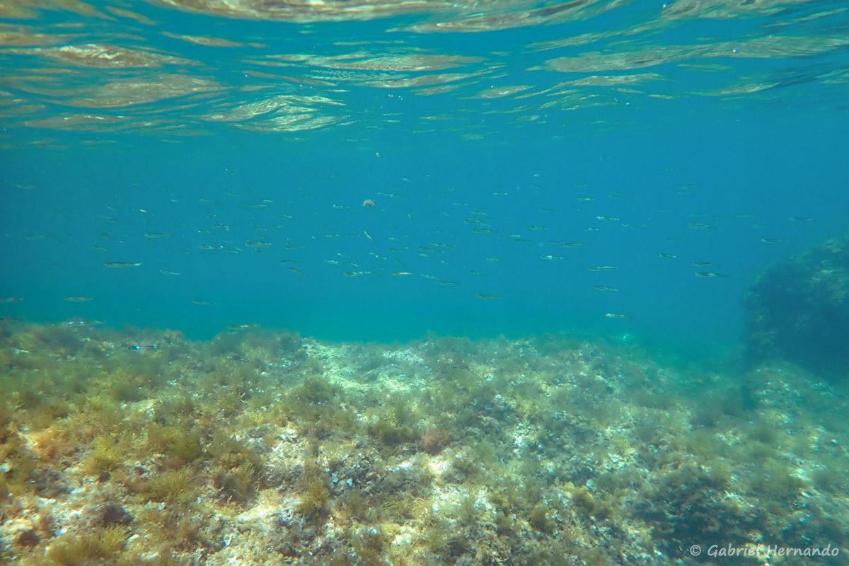 Vue sous-marine dans la calanque Cap Frioul, sur l'île Pomègues, de l'archipel du Frioul.