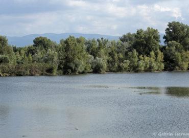 Vue sur l'un des bassins de la réserve naturelle de Cambounet sur le Sor (septembre 2018)