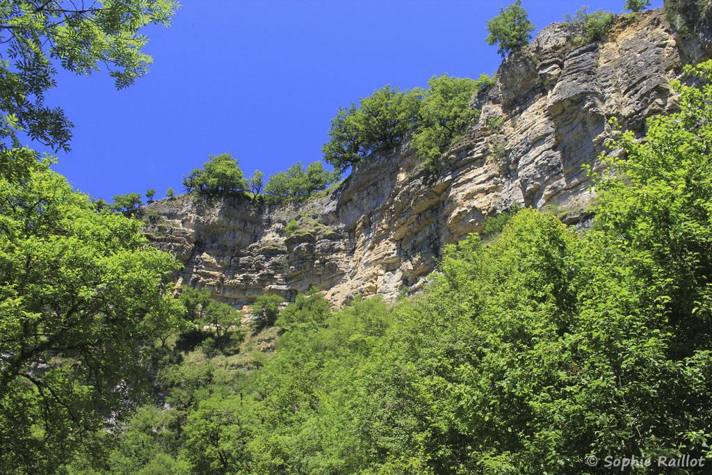 Minéral et végétal dans les gorges du Dourdou (Trou de Bozouls, Aveyron, juillet 2021)